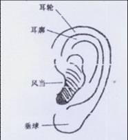 第五官,采听官(耳朵)