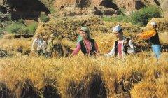 撒拉族的人口和分布地