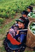 京族的风俗习惯