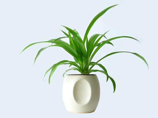 适合摆放在办公室的花卉植物推荐