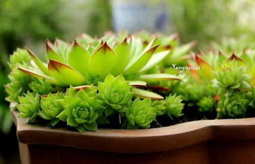 室内白摆放植物,可以净化空气,又可以增加财运.那么,室内植物