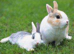 属兔的人终身运程_生肖兔的命运如何?