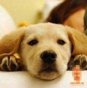 七月出生的属狗人命运好吗?