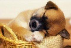 九月出生的属狗人命运好吗?