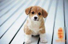 十月出生的属狗人命运好吗?