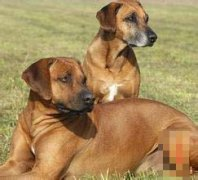 十二月出生的狗人命运好吗?