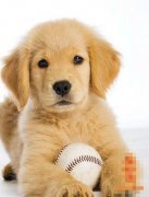 狗人生于亥时命运好吗?