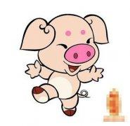 十一月出生的猪人命运好吗?