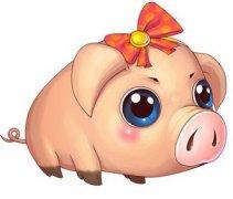 初八日生属猪人命运好吗?