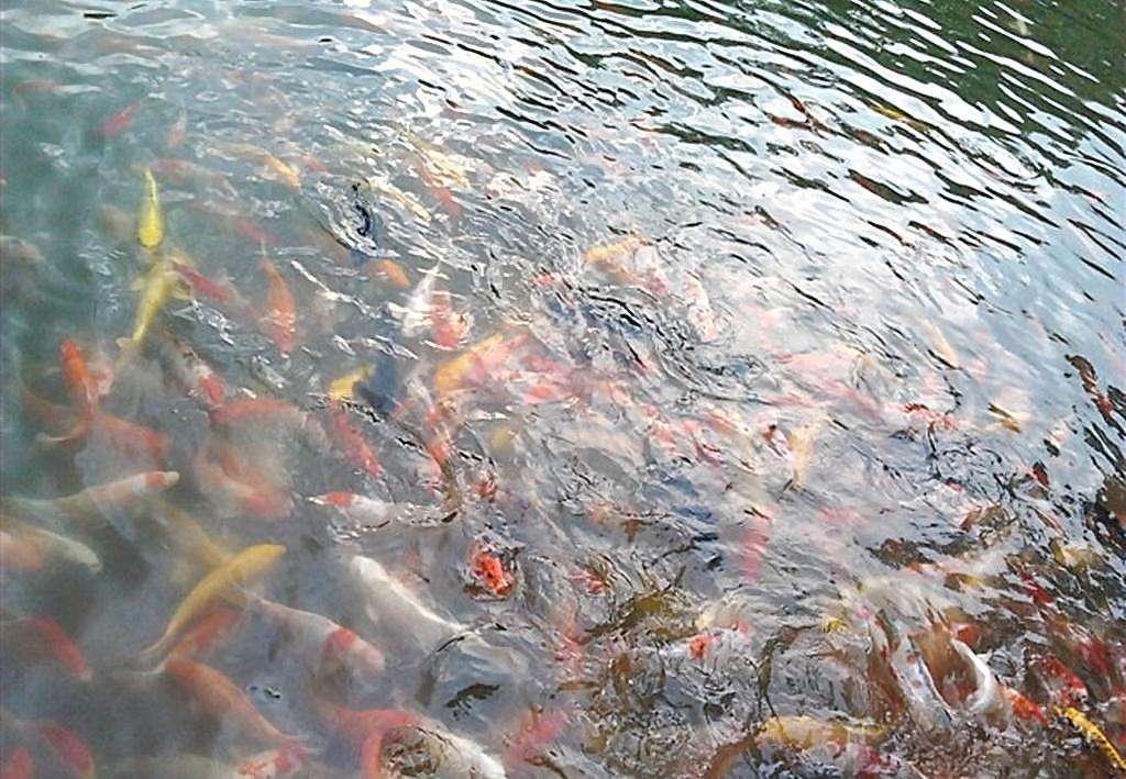 梦见浅水中抓鱼