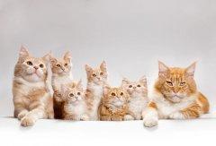 梦见一群猫追我周公解梦,梦见一群猫追我是什么意思?