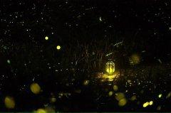 梦见萤火虫周公解梦,梦见萤火虫是什么意思?