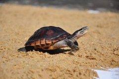 梦见用石头打乌龟周公解梦,梦见用石头打乌龟是什么意思?