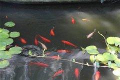 梦见鱼在河里或池塘周公解梦,梦见鱼在河里或池塘是什么意思?