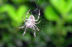 梦见蜘蛛结网周公解梦,梦见蜘蛛结网是什么意思?