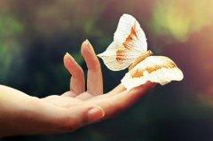 梦见追捕蝴蝶周公解梦,梦见追捕蝴蝶是什么意思?