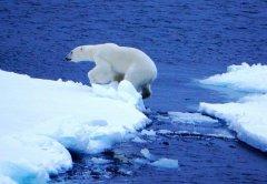 梦见北极周公解梦,梦见北极是什么意思?