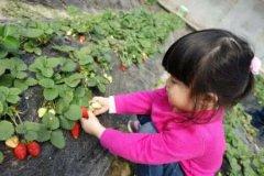 梦见摘草莓周公解梦,梦见摘草莓是什么意思?