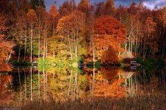 梦见榛树周公解梦,梦见榛树是什么意思?