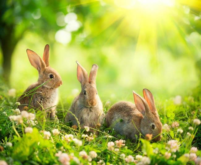 2020年什么生肖刑太岁 - 2020年属兔犯太岁怎么化解